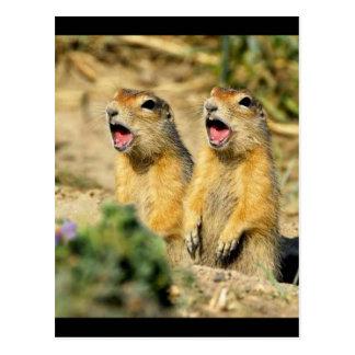 Perros de las praderas del canto postales