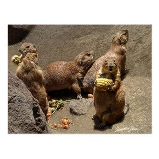 Perros de las praderas que comen la cena 1 postales