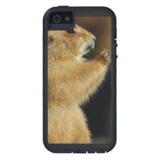 Perros de las praderas salvajes iPhone 5 carcasas