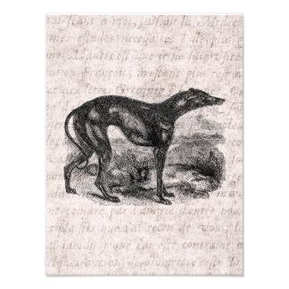 Perros de los galgos de los 1800s del perro del ga arte con fotos