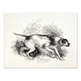 Perros de los indicadores de los 1800s del perro d cojinete