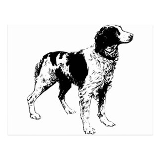 Perros de mascotas del perro de aguas de saltador postal