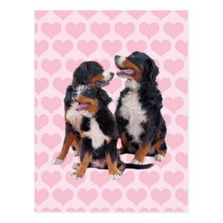 Perros de montaña de Bernese con los corazones Tarjeta Postal