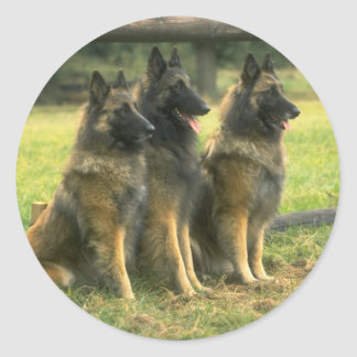 Perros de pastor alemán pegatina redonda