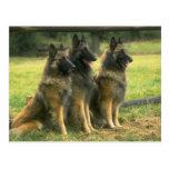 Perros de pastor alemán tarjetas postales