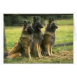 Perros de pastor alemán tarjetón