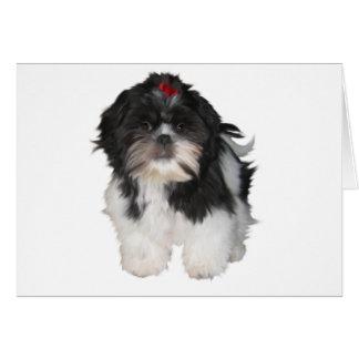 Perros de perrito de Shitzu Shih Tzu Tarjetón