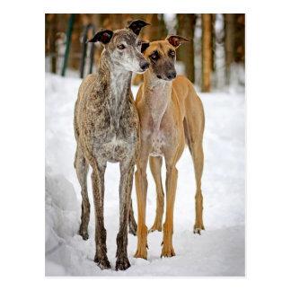 Perros de perrito del galgo Brindle y pegatinas Tarjetas Postales