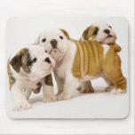 Perros de perrito ingleses lindos de los dogos que tapete de raton