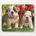 Perros de perrito ingleses lindos del dogo Mousepa Tapetes De Raton