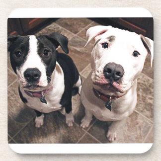 perros de perritos adorables del pitbull posavasos