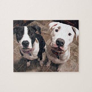 perros de perritos adorables del pitbull puzzle con fotos