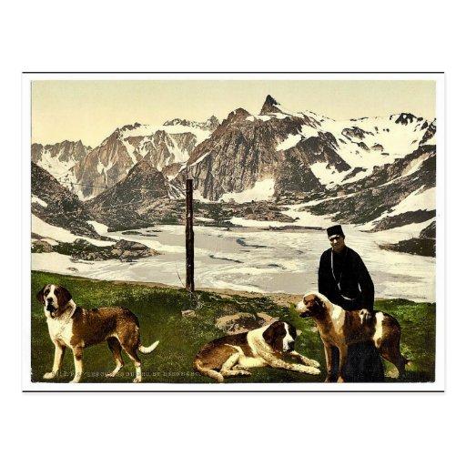 Perros de St Bernard, Valais, montañas de, cla de  Postales
