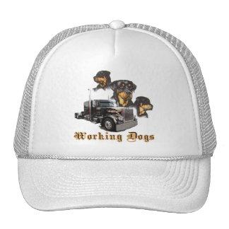 Perros de trabajo gorras de camionero