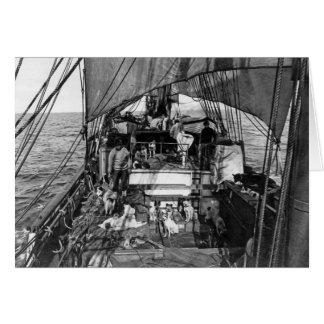Perros de trineo en el mar tarjeta