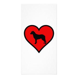 Perros del amor del corazón del perro perdiguero tarjetas personales