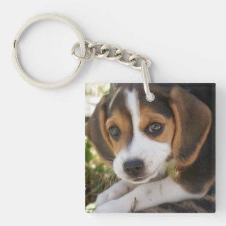 Perros del beagle llavero cuadrado acrílico a doble cara