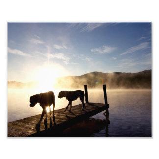 Perros del boxeador en muelle de niebla fotografías