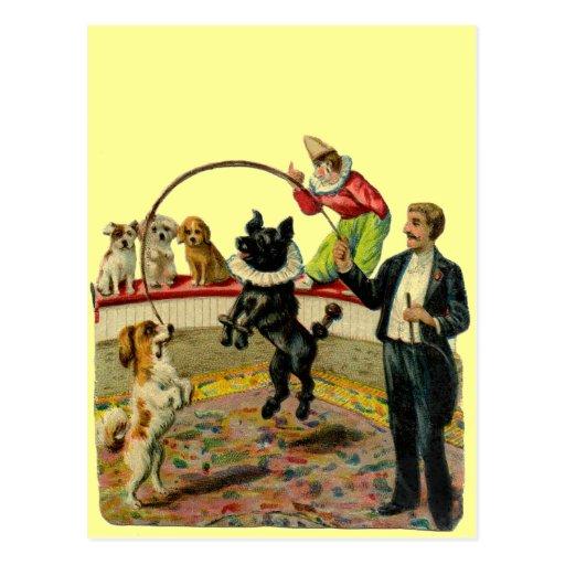 Perros del circo del Victorian, payaso del Postal
