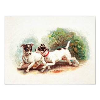 Perros del fox terrier de los 1800s del vintage -  fotografías