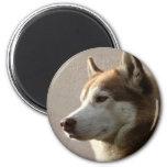 Perros del husky siberiano imán redondo 5 cm