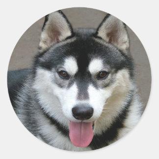 Perros del Malamute de Alaska Pegatina Redonda