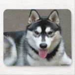 Perros del Malamute de Alaska Tapete De Ratón