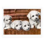 """Perros del vintage de """"cuatro perritos lindos"""" postal"""