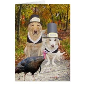 Perros divertidos/acción de gracias de los tarjeta de felicitación