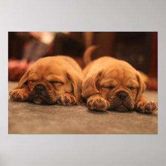 perros el dormir póster
