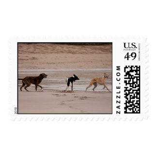 Perros en el franqueo de la playa sellos