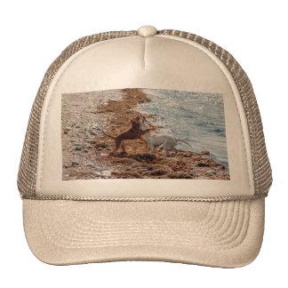 Perros en la playa gorra