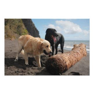 Perros en la playa fotografías