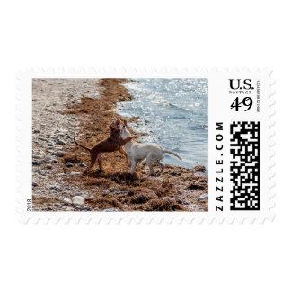 Perros en la playa franqueo