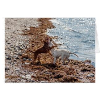 Perros en la playa tarjeta pequeña