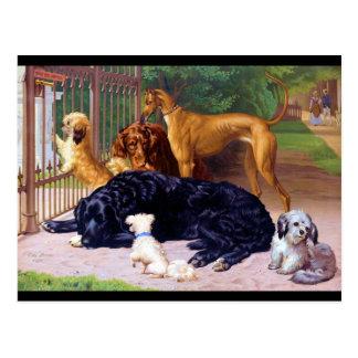 Perros en la puerta postal
