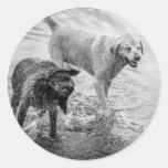 Perros en los pegatinas de la playa pegatina redonda
