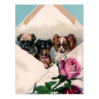 Perros en un sobre postales