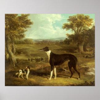 Perros, galgo y perro de aguas; El doctor Fop por Póster