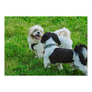 Perros Comunicado Personalizado