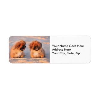 Perros lindos de Pekingese Etiqueta De Remite