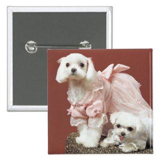 Perros malteses pin cuadrado