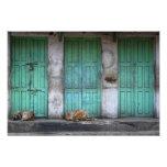 Perros perdidos delante de la foto verde sucia de fotografías