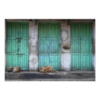 Perros perdidos delante de puertas verdes sucias fotografia
