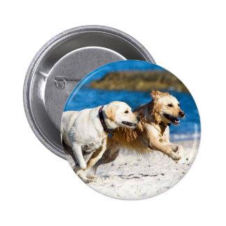 Perros perdigueros corrientes en la playa pin redondo de 2 pulgadas