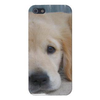 Perros perdigueros de oro adorables iPhone 5 fundas