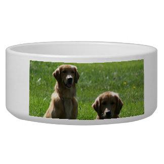 Perros perdigueros de oro bol para perro