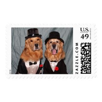 Perros perdigueros de oro en smokinges/novios sello postal
