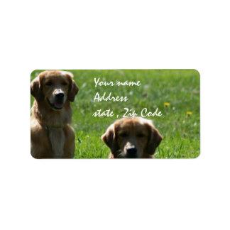 Perros perdigueros de oro etiquetas de dirección