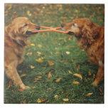 Perros perdigueros de oro que juegan esfuerzo supr azulejo